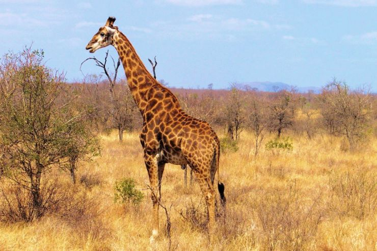 Kruger NP 58