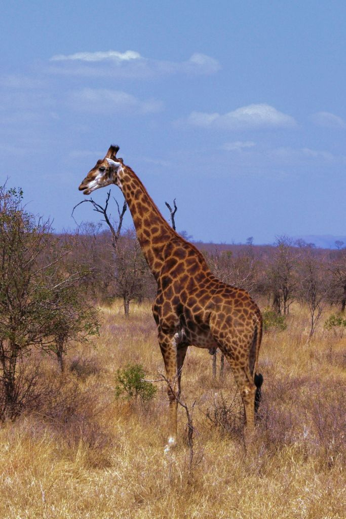 Kruger NP 59 - kopie