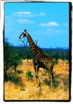 Kruger NP 59