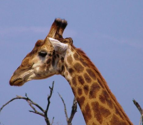 Kruger NP 60 - kopie