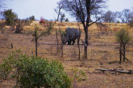 Kruger NP 61