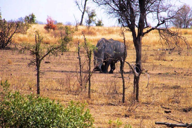 Kruger NP 62