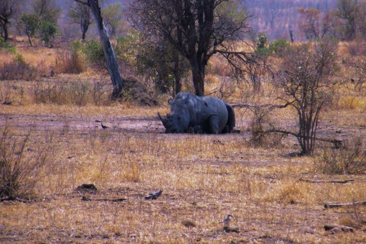 Kruger NP 63 - kopie