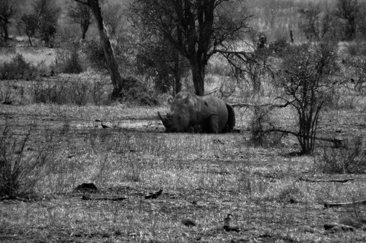 Kruger NP 63