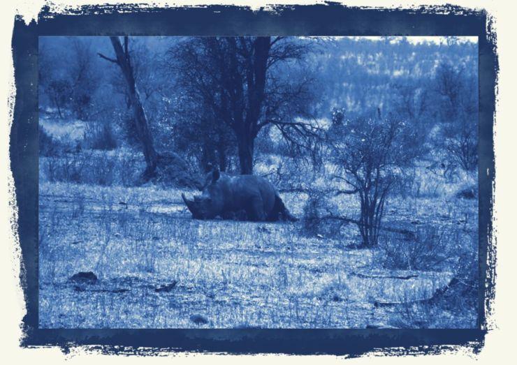 Kruger NP 64