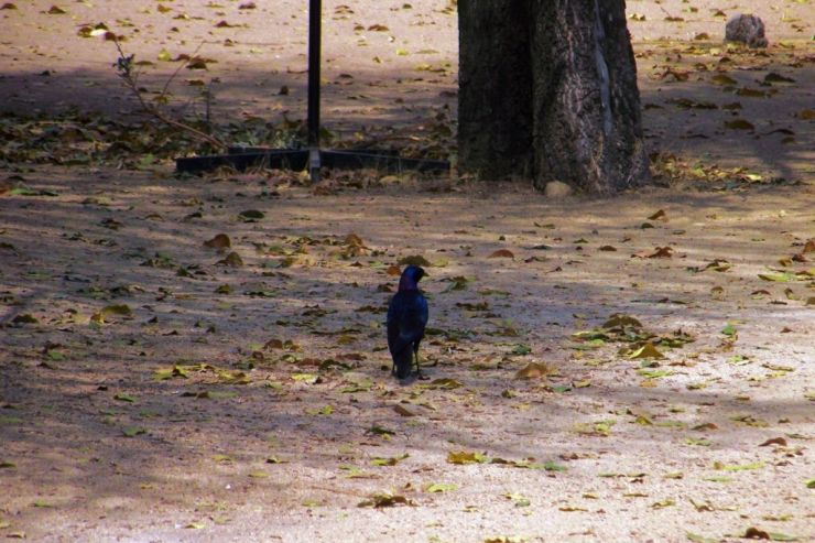 Kruger NP 69