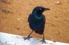 Kruger NP 70
