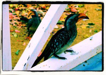 Kruger NP 71
