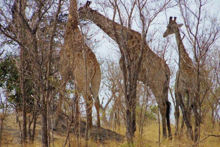 Kruger NP 72
