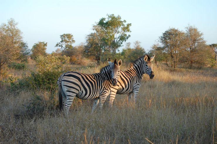Kruger NP 75