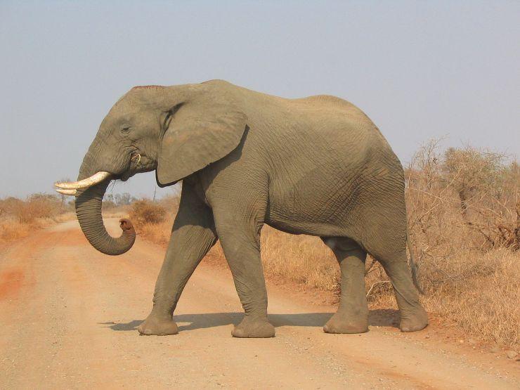 Kruger NP 77