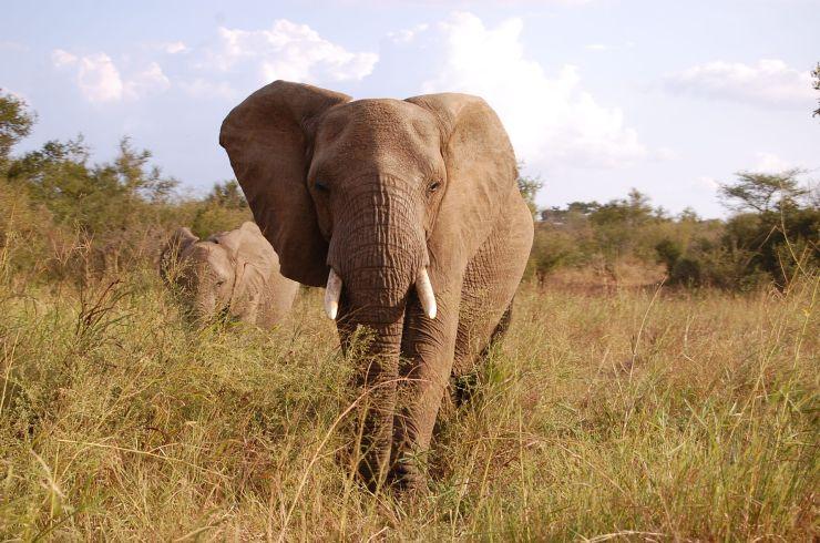 Kruger NP 78