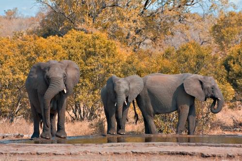 Kruger NP 79