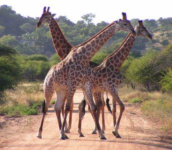 Kruger NP 80
