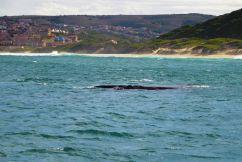 Mossel Bay (11)