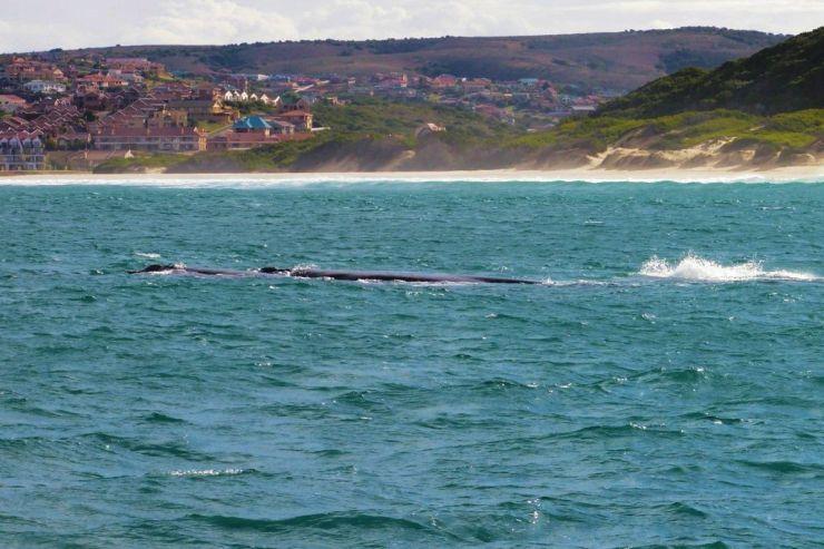 Mossel Bay (12)