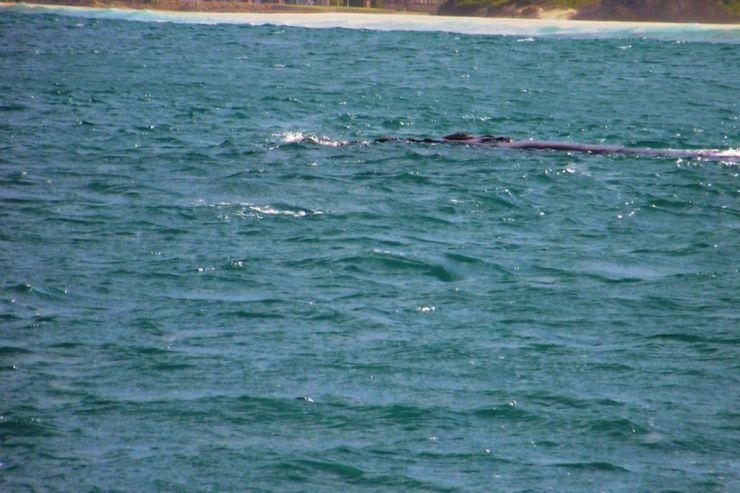 Mossel Bay (13)