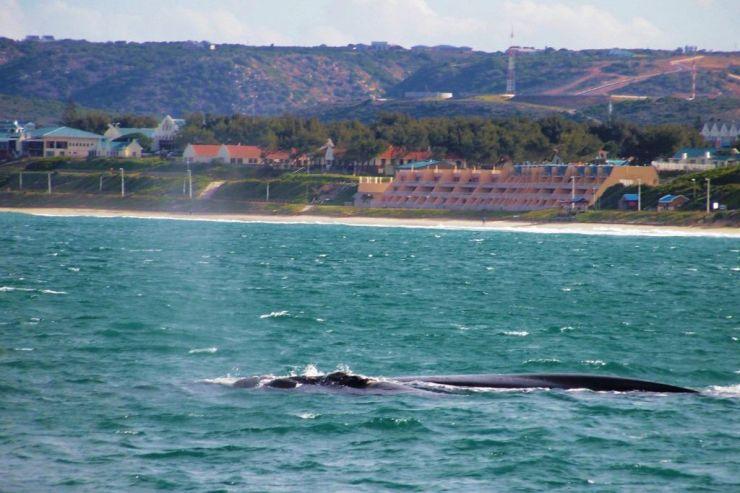 Mossel Bay (14)