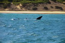Mossel Bay (2)