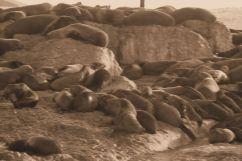 Mossel Bay (23)