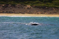 Mossel Bay (4)