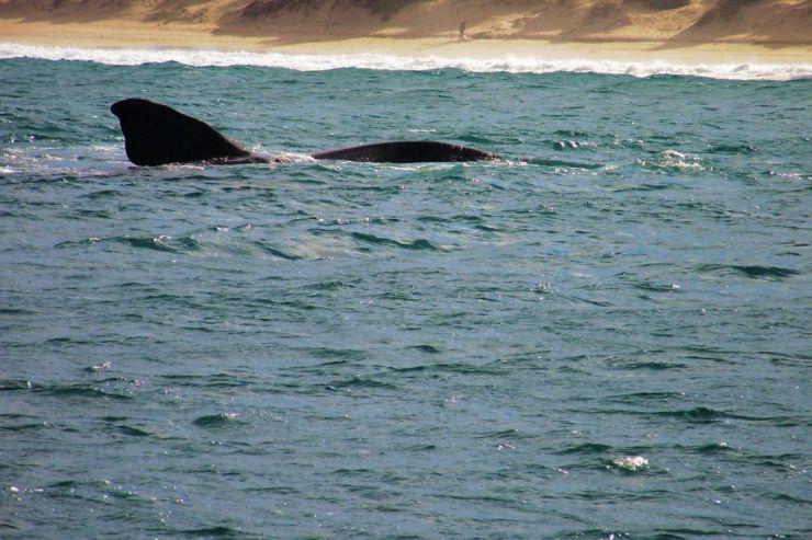 Mossel Bay (7)