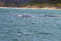 Mossel Bay (9)