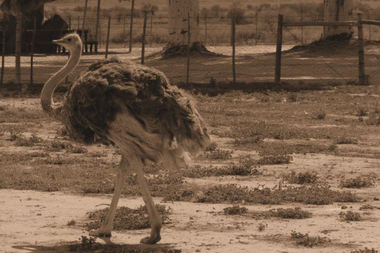 Oudtshoorn (14)