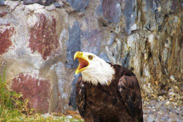 Parque Condor (12)