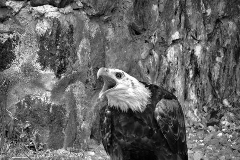 Parque Condor (13)