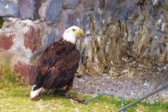 Parque Condor (14)
