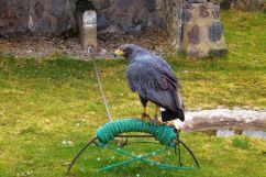 Parque Condor (15)