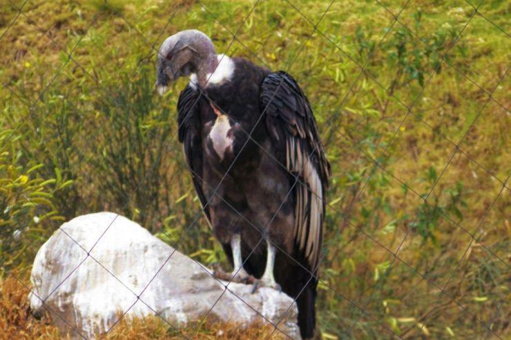 Parque Condor (22)