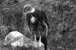 Parque Condor (23)