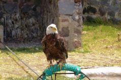 Parque Condor (8)