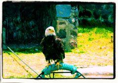 Parque Condor (9)