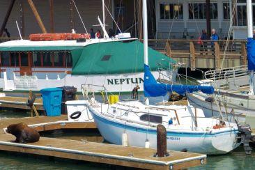 Pier 39 (10)