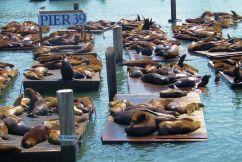 Pier 39 (4)