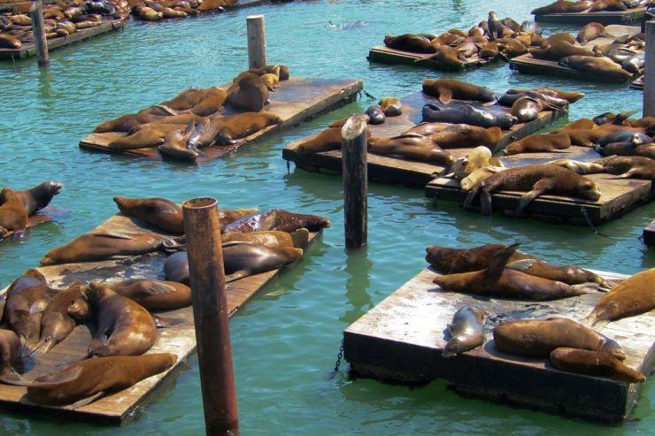 Pier 39 (6)