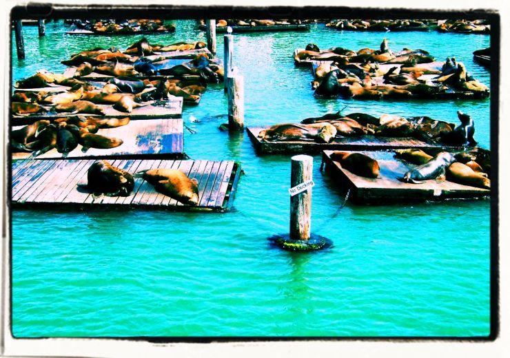 Pier 39 (7)