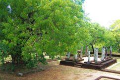 Polonnaruwa (8)