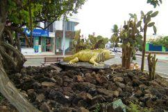 Puerto Ayora (15)