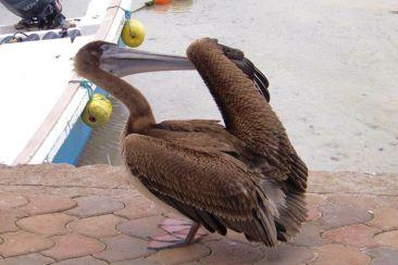 Puerto Ayora (22)