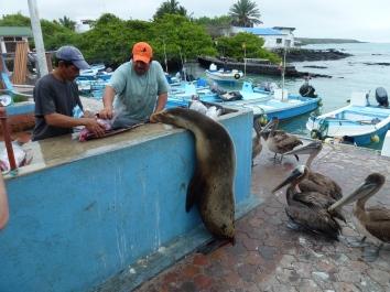 Puerto Ayora (28)