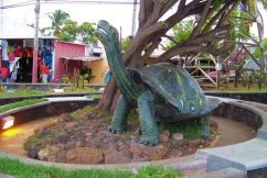 Puerto Ayora (4)