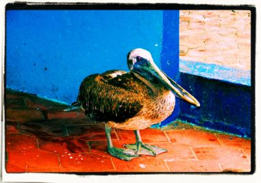 Puerto Ayora (7)