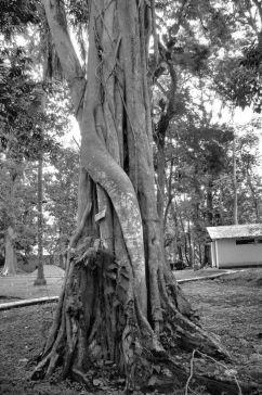 Quirigua (3)