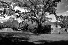 Ruinas de Copan (101)