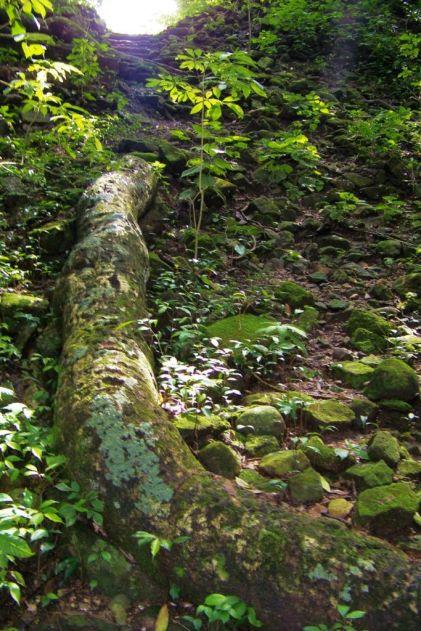 Ruinas de Copan (14)