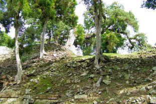 Ruinas de Copan (37)